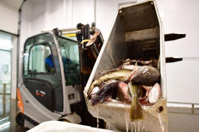 Wózki widłowe dla branży rybnej