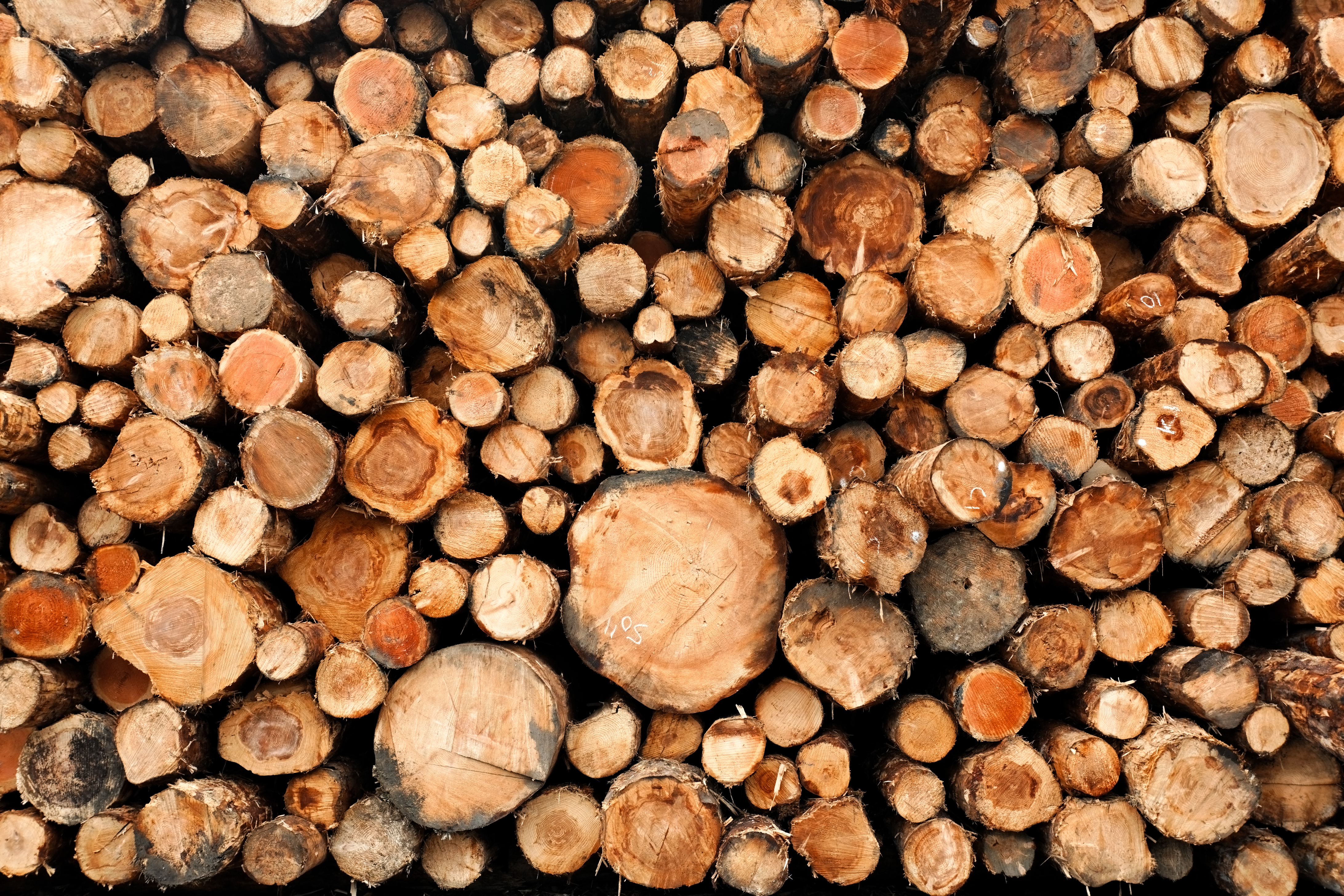 Trendy w transporcie drewna i papieru